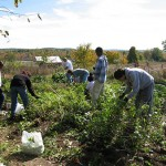 many-vols-in-garden-incl-POC-(10-10-14-06-51-01)